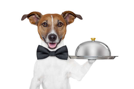 dog holding service tray and cover Stock Photo - 14703923