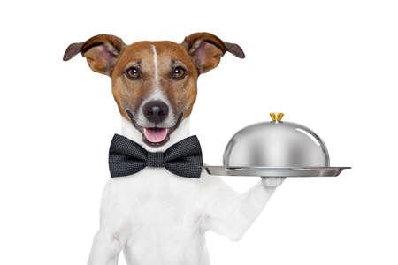 trays: hond houdt dienblad en deksel Stockfoto