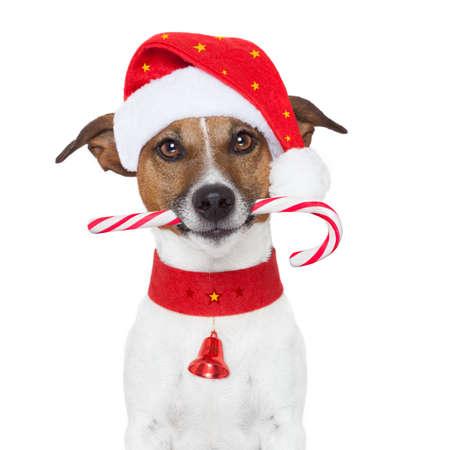 perros graciosos: navidad perro como santa