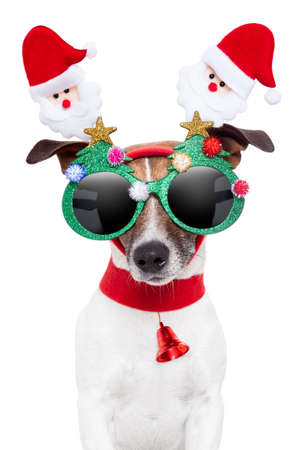 christmas costume: xmas dog with funny sunglasses Stock Photo