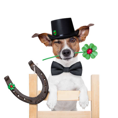 good luck chimney sweeper dog with hat and clover photo