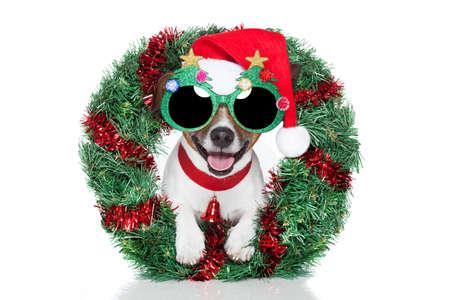 面白いサングラス クリスマス犬 写真素材