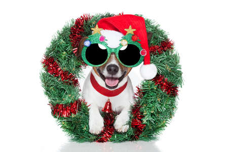 xmas dog with funny sunglasses Stock Photo