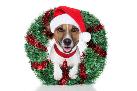xmas dog with funny santa hat Stock Photo - 14821325
