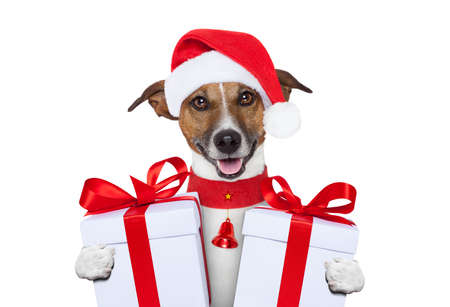 santa christmas dog with gifts photo