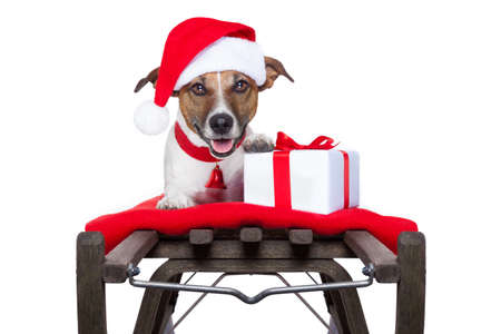 christmas dog on sleigh as santa photo