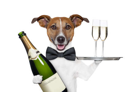 happy new year: dog toasting new years eve Stock Photo