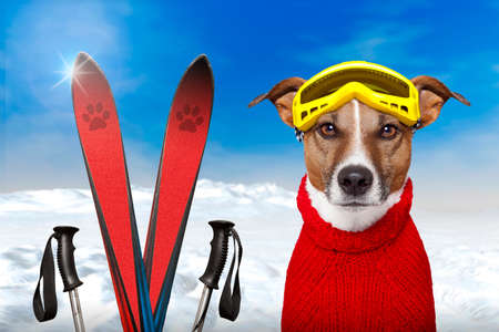 slope: winter dog ski snow Stock Photo