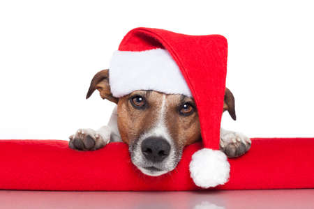 christmas dog santa baby red hat Stock Photo
