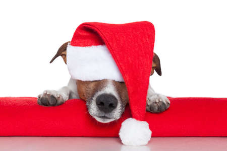 terriers: christmas dog santa baby red hat Stock Photo
