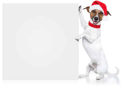 christmas dog Platzhalter santa baby photo