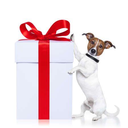 christmas dog with present photo