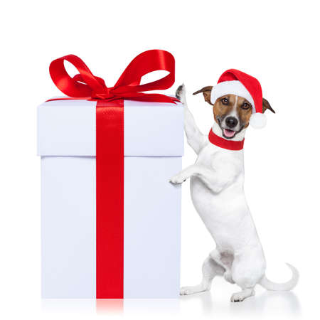 christmas santa dog with a gift Stock Photo - 14912736