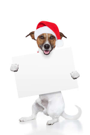 christmas dog placeholder as santa photo