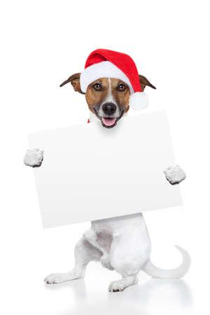 dog christmas: christmas dog placeholder as santa