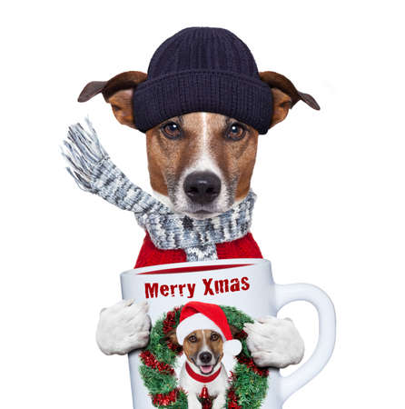 christmas dog with cup and scarf photo