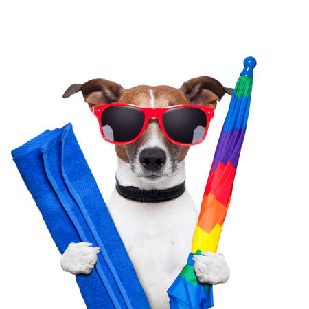 dog summer holidays umbrella and towel Stock Photo