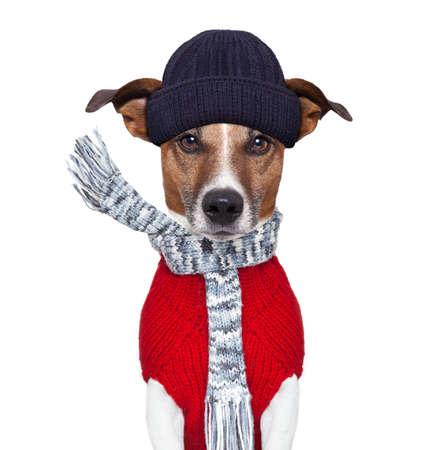perros graciosos: perro invierno bufanda gorro de lana Foto de archivo