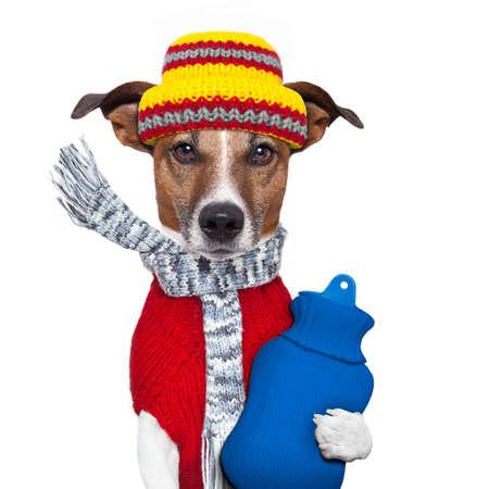 sueteres: perro invierno bufanda gorro de lana Foto de archivo