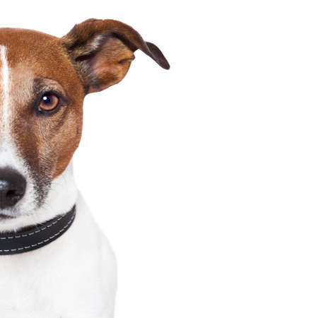 placeholder banner dog Stock Photo - 15179288