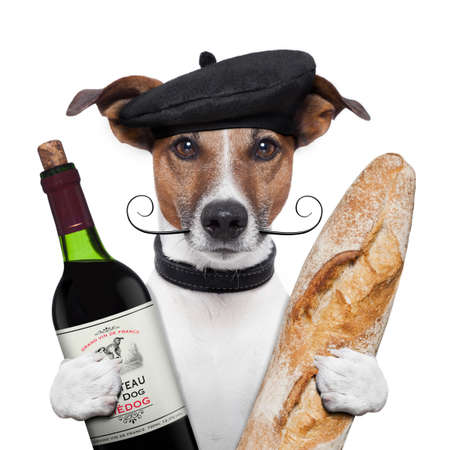 french dog wine baguette beret photo