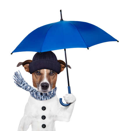 rain umbrella winter dog photo