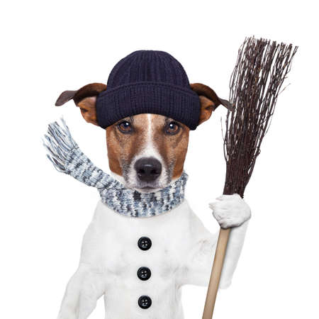 rain broom winter dog photo