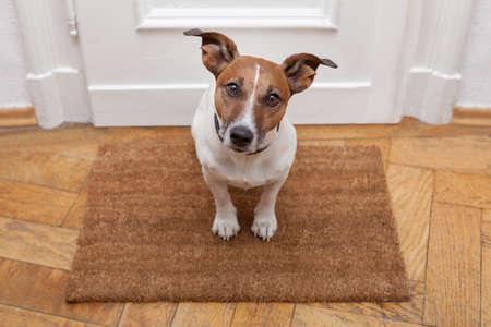 casa de perro: perro bienvenido a casa en la estera marr�n Foto de archivo