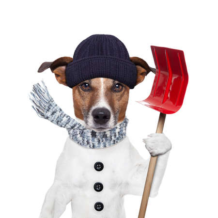 winter dog red shovel snow photo