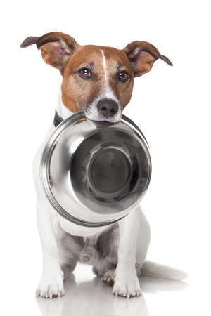 dog: 배고픈 강아지 음식 그릇 입