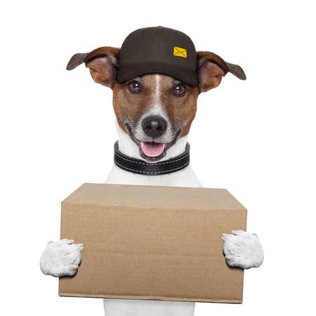 개 배달 포스트 박스 스톡 콘텐츠