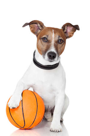Basket ball  winner dog Stock Photo