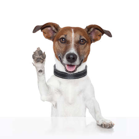 hello goodbye high five dog Stock Photo - 15322982