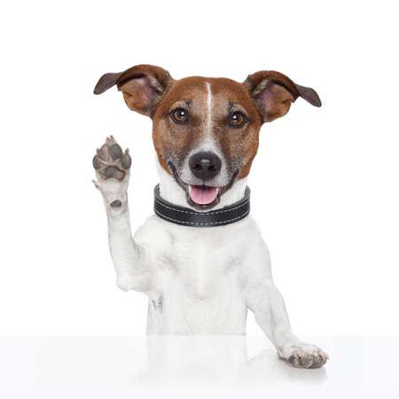 gente saludando: hola adi�s m�ximo de cinco perros Foto de archivo