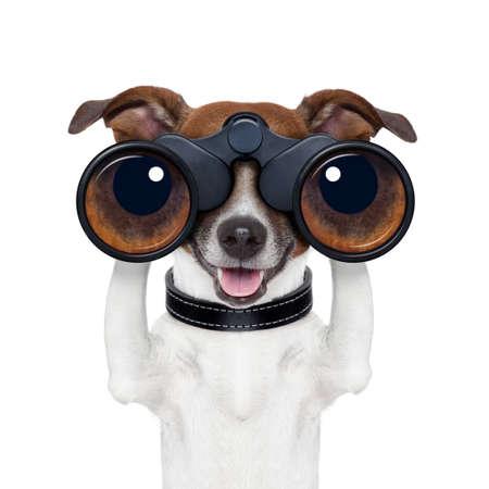 búsqueda binoculares perro mirando y observando Foto de archivo