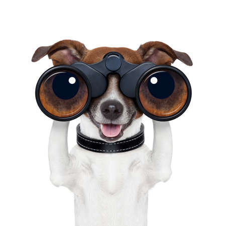observation: binoculars dog searching looking and observing Stock Photo