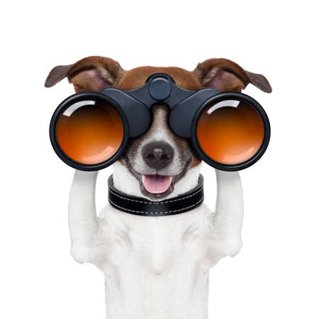 find: binoculars dog searching looking and observing Stock Photo
