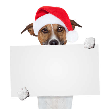 christmas paste: christmas banner placeholder dog Stock Photo