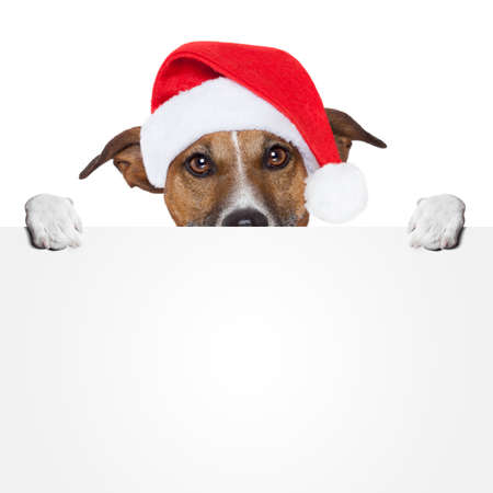dog isolated: christmas banner placeholder dog Stock Photo