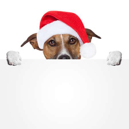 weihnachten zweig: christmas banner Platzhalter dog