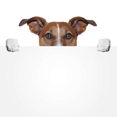 jack russell terrier puppy: placeholder banner dog