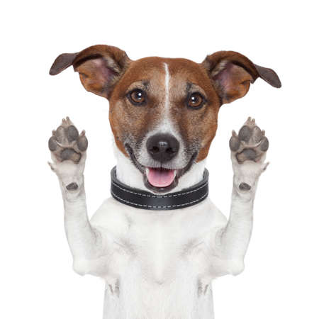 hello goodbye high five dog Stock Photo - 15552001
