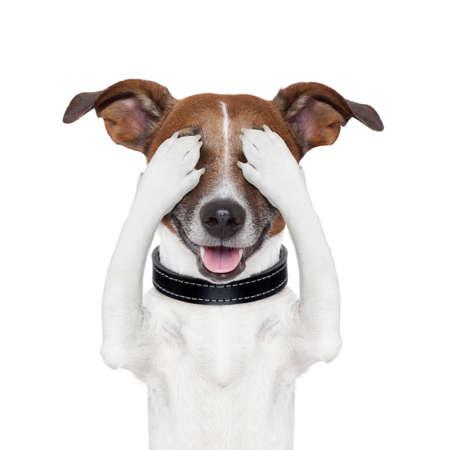 asustado: ocultando que abarca tanto los ojos de perro Foto de archivo