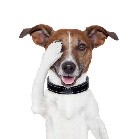 perro asustado: ocultando que cubre un perro gu�a