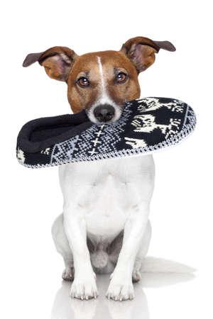 masticar: perro zapatilla de lana en la boca