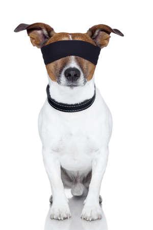blinddoek hond die beide ogen