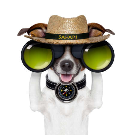 discover: binoculars safari compass dog watching Stock Photo