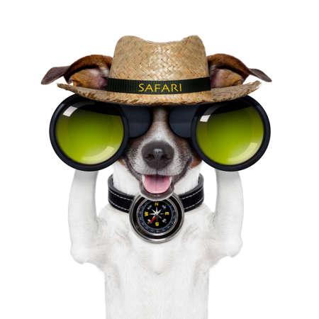 descubrir: prism�ticos safari br�jula perro mirando Foto de archivo