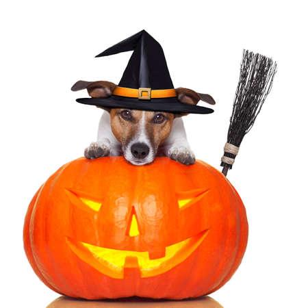Halloween pompoen heks hond met een bezem