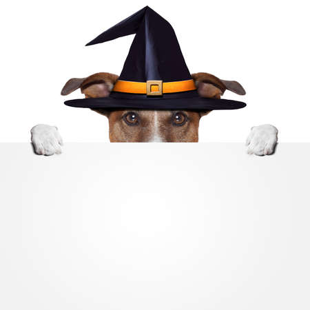 halloween placeholder banner dog Stock Photo - 15777689